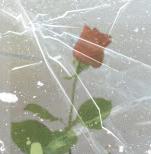 roos in ijs 4